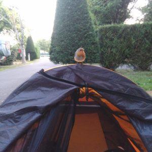 randonnée-solitaire-camping