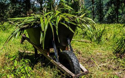 Faire du volontariat en Colombie :  La montagne, les orchidées et la bonne bouffe (Partie 1)