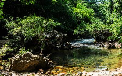 Rio Claro : Escale express à la réserve naturelle