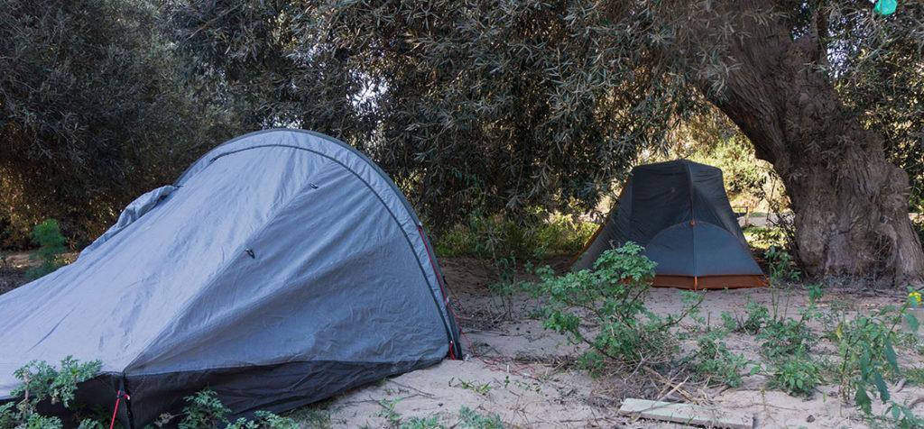 nuyit sous la tente et les oliviers, yauca, perou