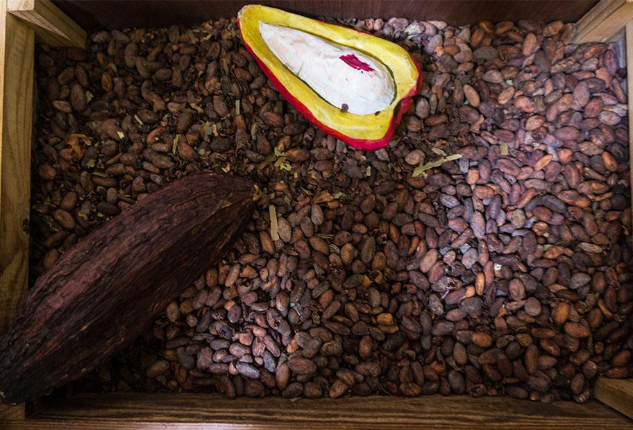 feves chocolat musée du chocolat à Cuzco