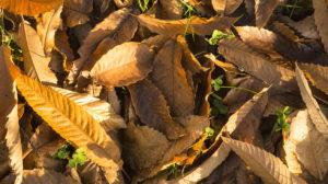 feuilles mortes automne