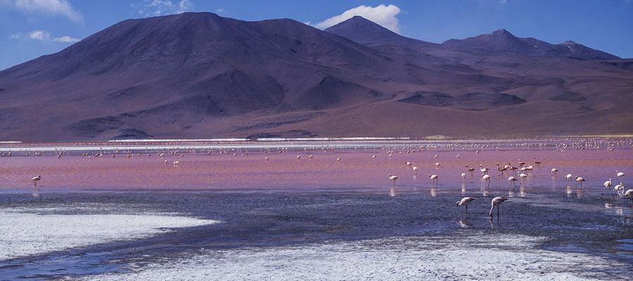 Salar de Uyuni laguna colorada