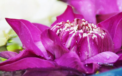 Visites à Bangkok : Jim Thompson, jet-lag et arnaque