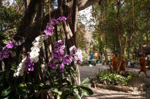 des orchidées et des moines