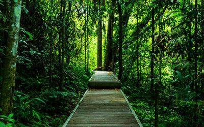 Road-trip en Malaisie : Des Cameron Highlands au Taman Negara