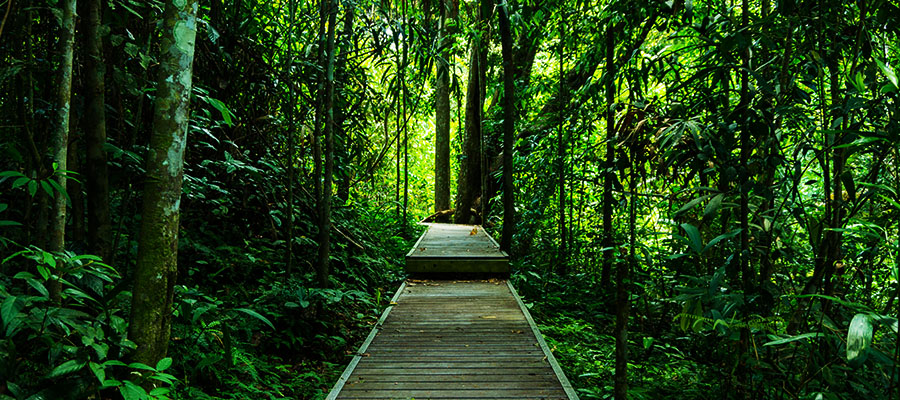 Carnet n°44 - Road-trip en Malaisie : Des Cameron Highlands au Taman Negara