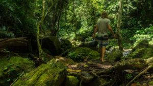 jungle pulau weh
