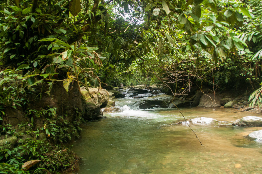 rviere dans la jungle de bukit lawang