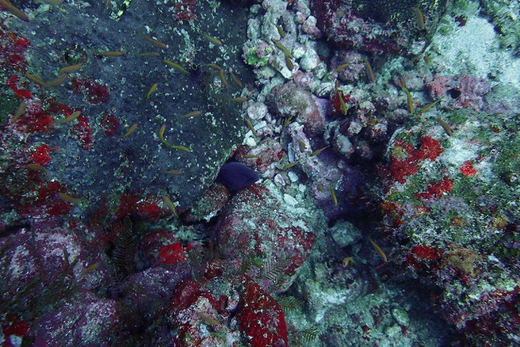 plongée pulau weh