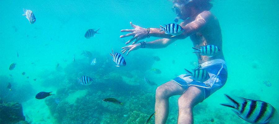Carnet n°45 - Tioman Island : plongée et détente