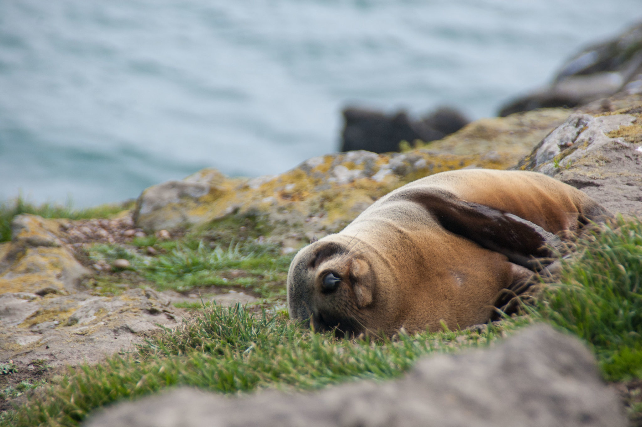 seals in nouvelle zélande