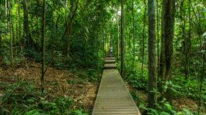 Dans la jungle du Taman negara