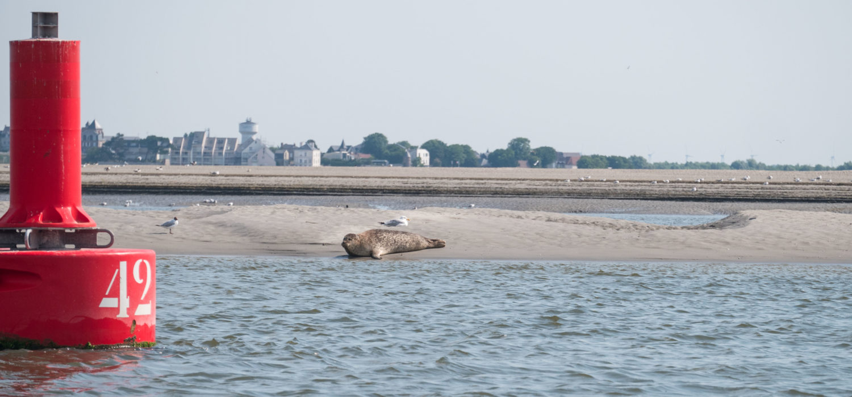 activité en baie de somme : aller voir les phoques